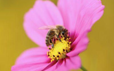 Notre avis sur le botox capillaire Gianni Monardo miel de rose