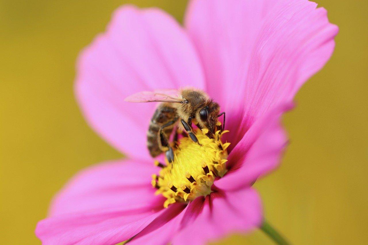 gianni monardo miel de rose